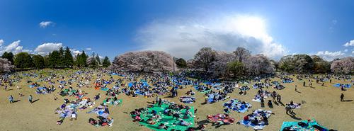 2014_kinuta_sakura_Pano_900.jpg